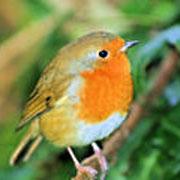 Наблюдение за птицами и «птичий туризм»